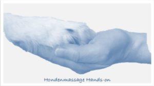 hondenmassage hands on